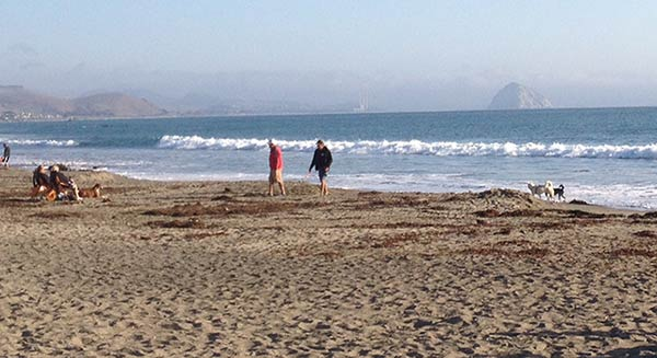 Cayucos beach with views of Morro Rock